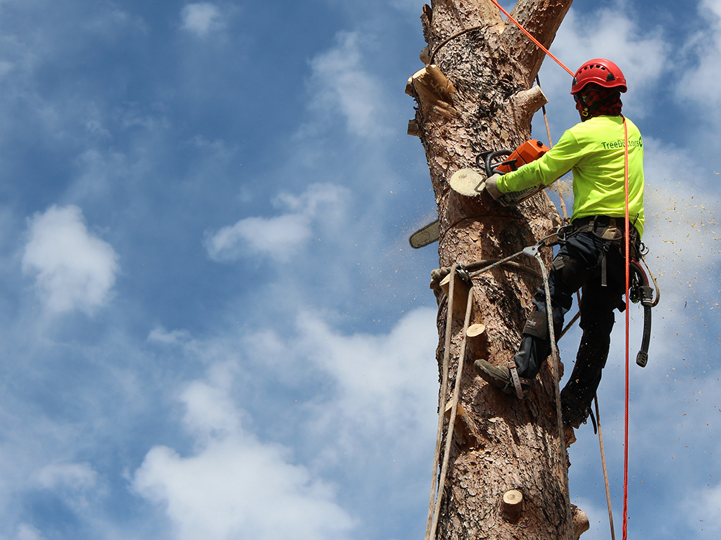 man in protective gear using a chainsaw while up a tree trunk